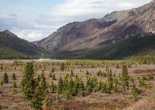 Denali National Park Landscape Royalty Free Stock Images