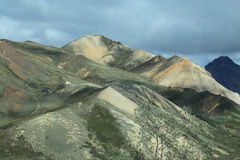 Denali National Park Royalty Free Stock Image