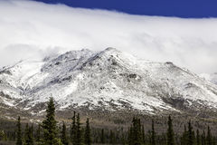 Denali national park Royalty Free Stock Photography