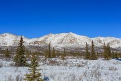 Denali National Park and Preserve Stock Images