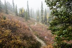 A trail winds around a hillside into fog and trees. Denali National Park season`s end in Alaska Royalty Free Stock Images