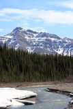 Denali National Park in Spring Royalty Free Stock Photo
