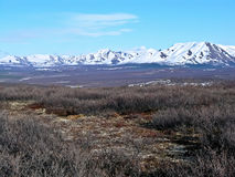 Denali National Park in Spring Stock Photography