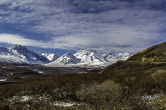 Denali nationalpark Arkivfoto