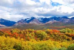 Denali nationalparklandskap Arkivbilder