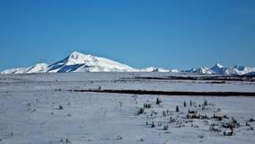 Denali nevado imagens de stock royalty free