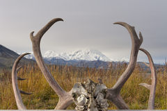 Denali Park Mount Mc Kinley panorama Stock Photos