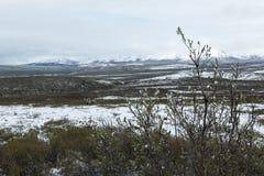 Denali parka narodowego krajobraz Obraz Stock