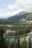 Denali's Horseshoe Lake Stock Image