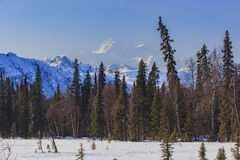 Denali State Park Royalty Free Stock Photos