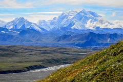 Denali. Summer in Denali National Park, Alaska royalty free stock images