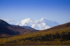 Denali - The Big One Royalty Free Stock Images