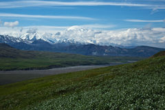 Denali Stock Photos