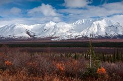 Denaliaandrijving 2, het Nationale Park van Denali, Alaska, de V.S. stock foto's