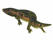 Dendrerpeton Amphibian Tail. Dendrerpeton was an extinct genus of amphibious carnivore from the Carboniferous Period of Canada stock illustration