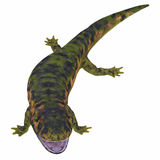 Dendrerpeton Amphibian on White Royalty Free Stock Images