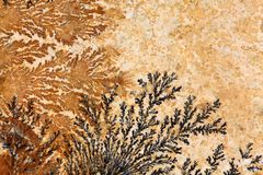 Dendrites. Dendritic minerals (iron- and manganese oxides) on Solnhofen Limestone (Upper Jurassic of Southern Germany royalty free stock images