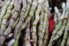 Dendrobium Stock Images