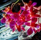 Dendrobium nobile Image stock