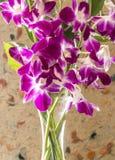Dendrobium nobile dans le vase Images stock