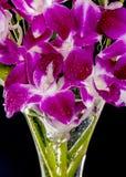 Dendrobium nobile dans le vase Images libres de droits