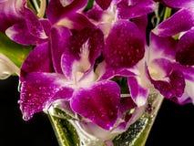 Dendrobium nobile dans le vase Photos stock