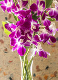 Dendrobium nobile dans le vase Image libre de droits