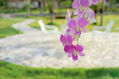 Dendrobium orchid on blurred outdoor chairs Royalty Free Stock Photos