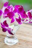 Dendrobium orchid flower Stock Photos