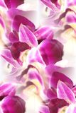 Dendrobium orchid lei abstract Royalty Free Stock Photo