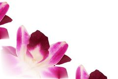 Dendrobium orchid lei abstract Royalty Free Stock Images