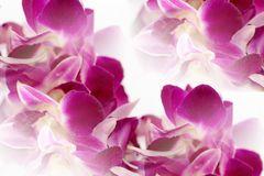 Dendrobium orchid lei abstract Stock Photo