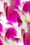 Dendrobium orchid lei abstract Stock Image