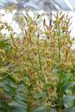 Dendrobium orchid Stock Photos