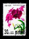 Dendrobium taysuwie kwiat, zawody międzynarodowi Stemplowy powystawowy Lemański seria około 1992, Fotografia Royalty Free