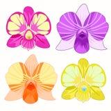 DendrobiumOrchidea uppsättning av rosa färger, lilor, guling, apelsin vektor Royaltyfria Foton
