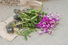 Dendrobiumorkidébland i golvet fotografering för bildbyråer