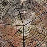 dendrochronology image stock