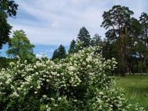 Dendrologicalpark in de Oekraïne Stock Foto's