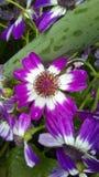 Denfärg blomman arkivfoton