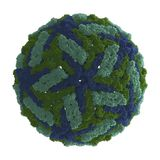 Dengue Virus (DENV) Stock Photo