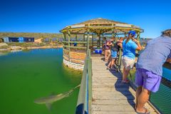 Ocean Park Aquarium Denham. Denham, Australia - Dec 20, 2017: tourists admire marine environment and various species of Australian sharks at Ocean Park Marine royalty free stock images