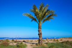 Denia beach Las Marinas with palm trees Alicante Stock Images