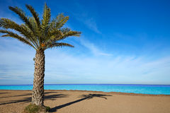 Denia Las Marinas beach palm trees in Spain Royalty Free Stock Photo