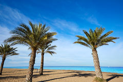 Denia Las Marinas beach palm trees in Spain Stock Images
