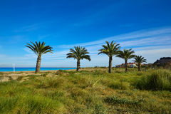 Denia Las Marinas beach palm trees in Spain Royalty Free Stock Images