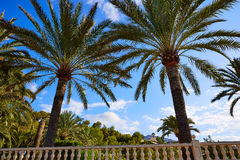 Denia palm trees in Marineta Casiana beach Stock Photo