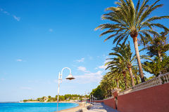 Denia palm trees in Marineta Casiana beach Stock Photography