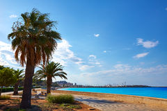 Denia palm trees in Marineta Casiana beach Stock Images