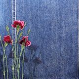 Denim background with flower Stock Image